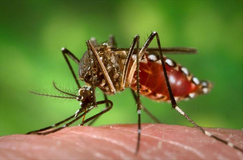 First-ever dengue fever vaccine gets green light in Mexico